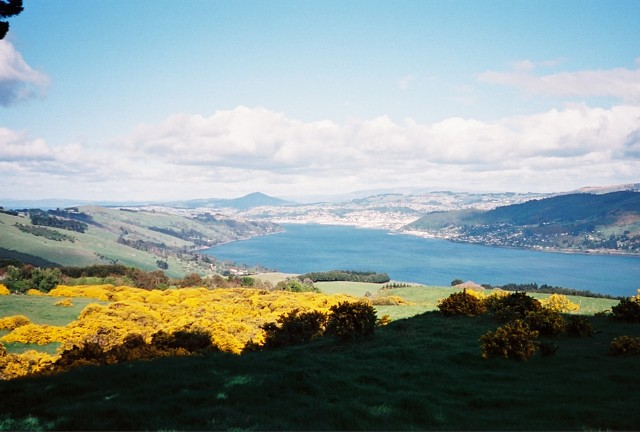 View of distant Dunedin