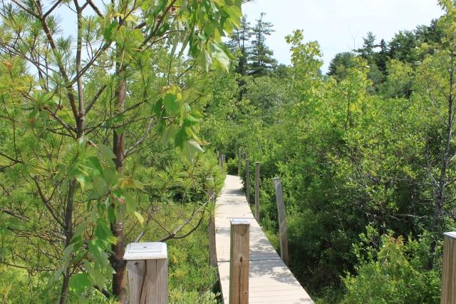 Boardwalk across the swamp
